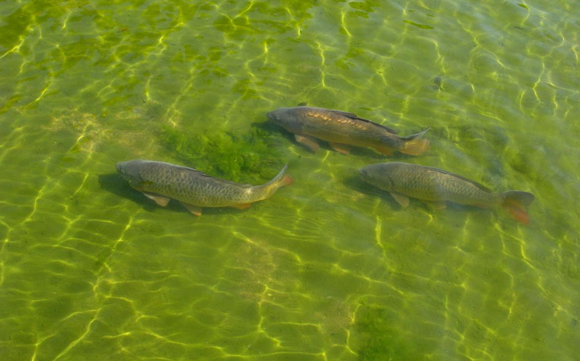 як організувати бізнес по вирощуванню і вилову риби
