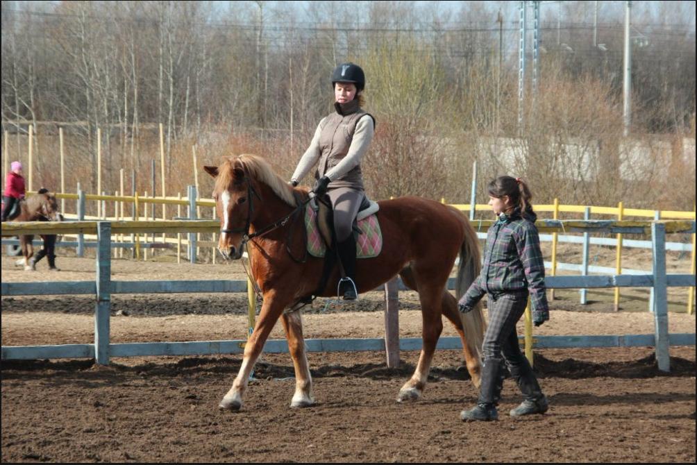 Как организовать открытие конно-спортивного клуба