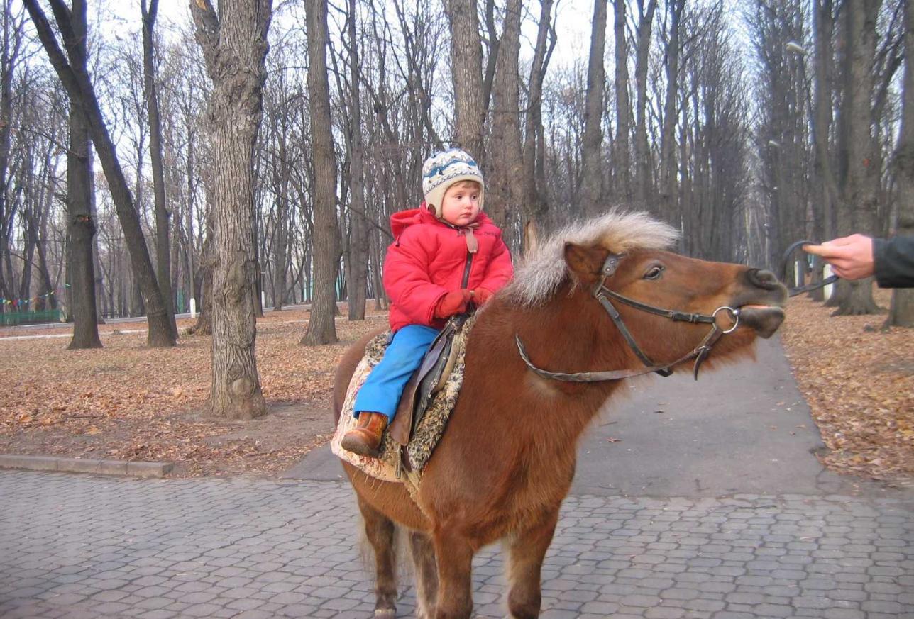 бизнес-идея катания детей на пони