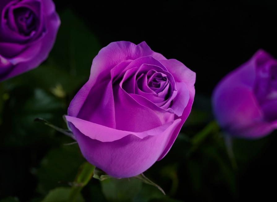 бизнес идея продажи цветов светящихся в темноте