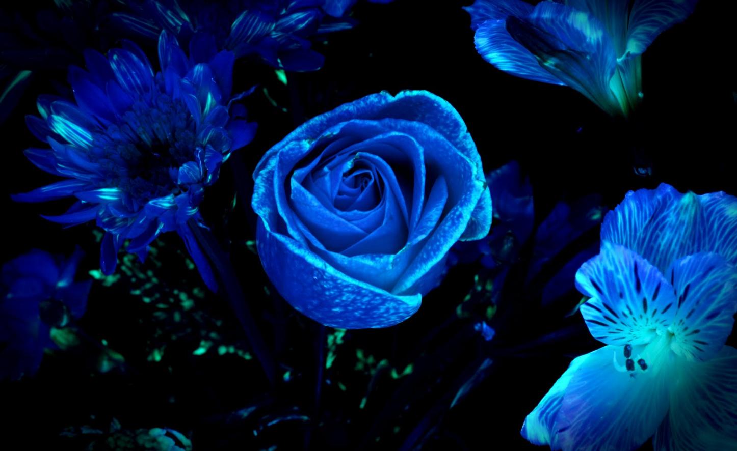 Светящиеся в темноте цветы