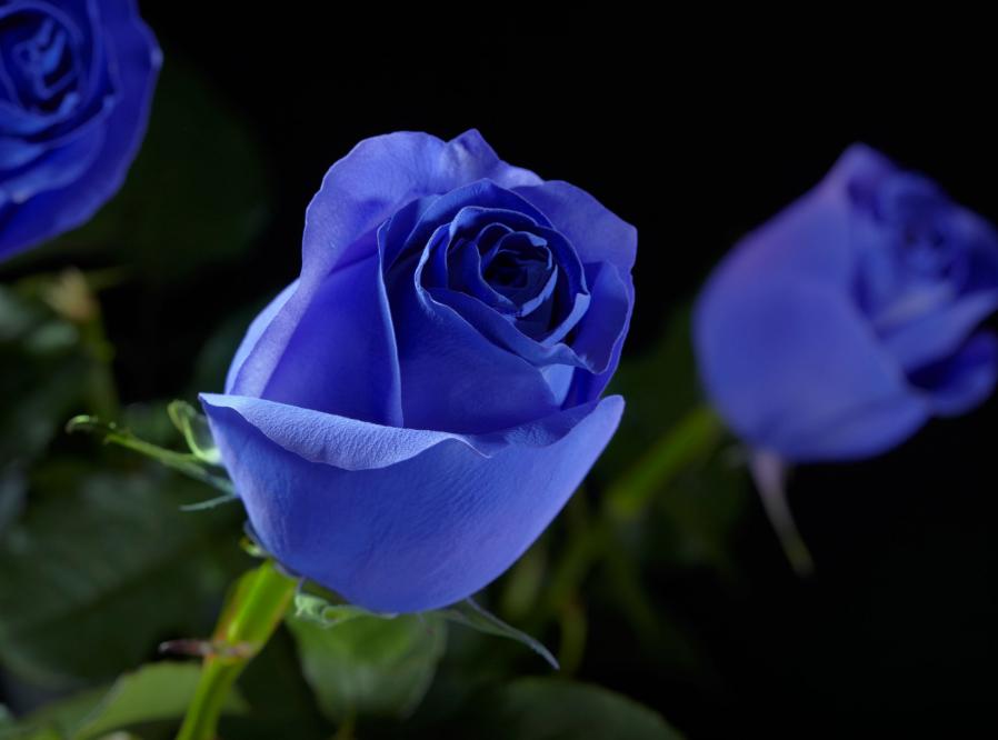 как организовать бизнес по продаже цветов светящихся в темноте