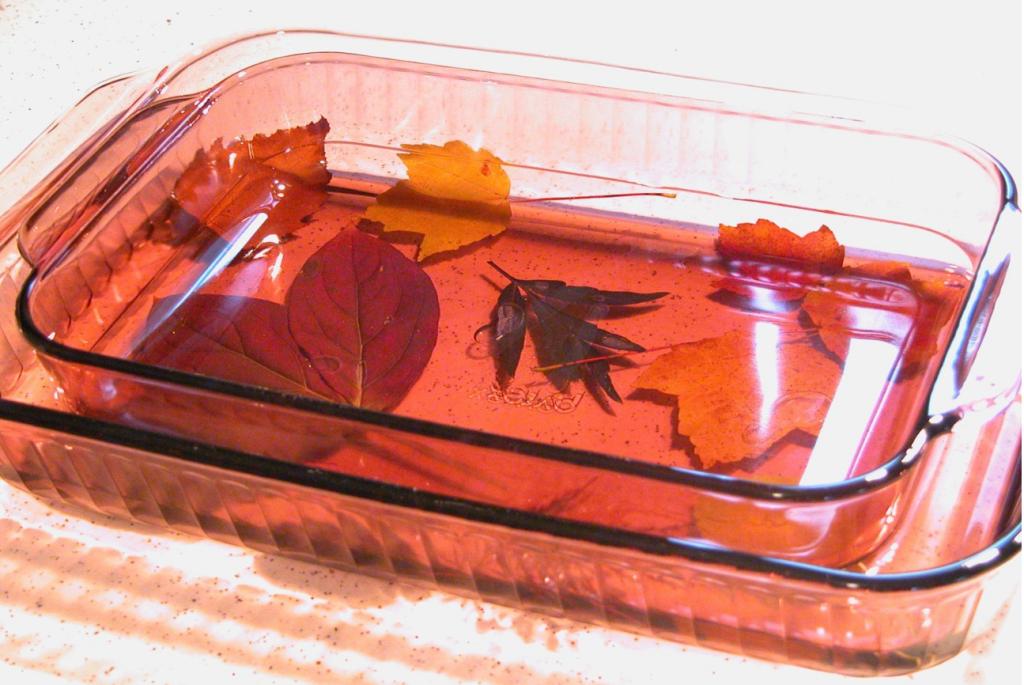 Листья в глицерине своими руками мастер класс 88