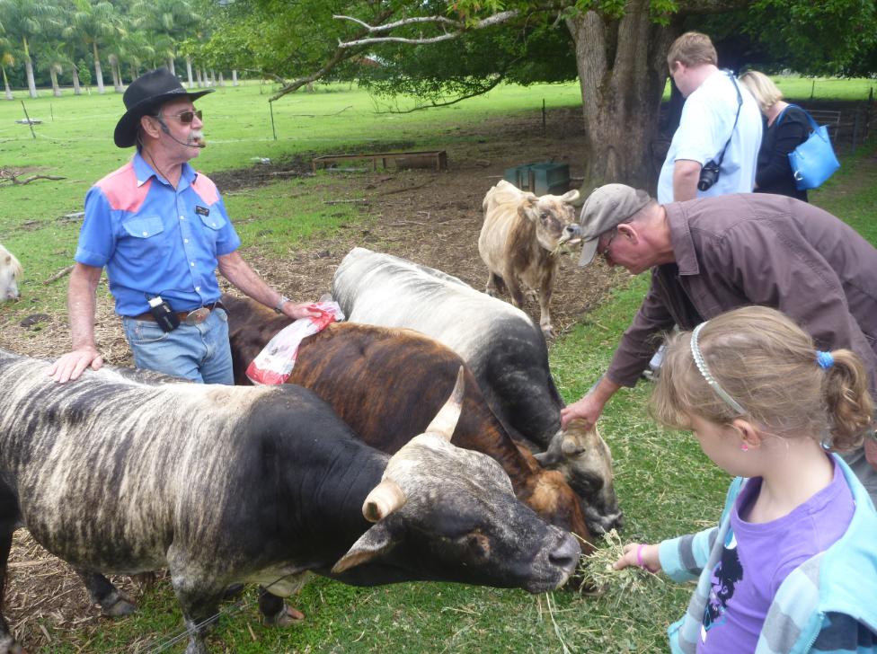 як організувати бізнес з розведення карликових корів