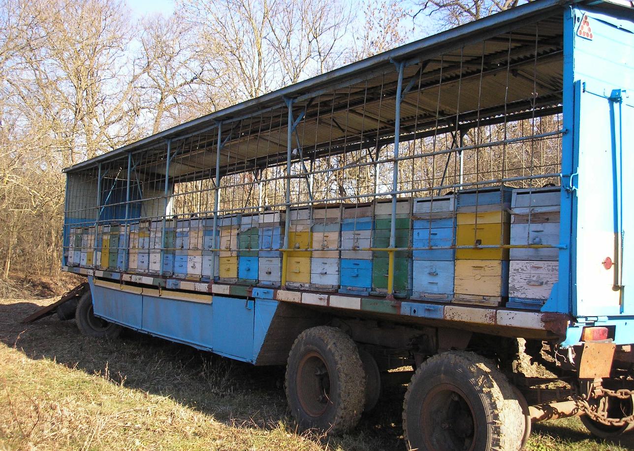 Как организовать мобильный пчелиный бизнес
