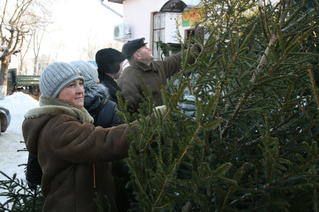 новогодняя бизнес-идея по продаже елок и елей