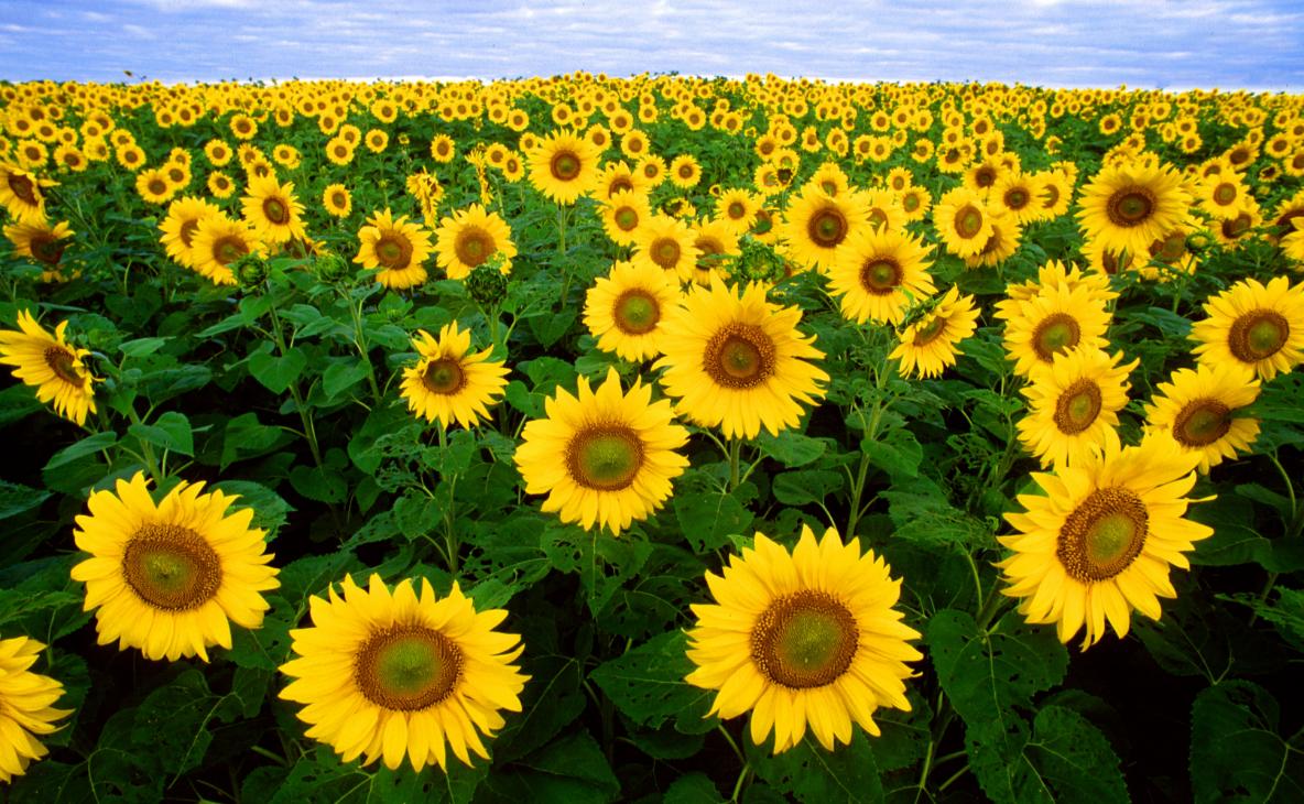 6 прибыльных бизнес-идей в сельском хозяйстве