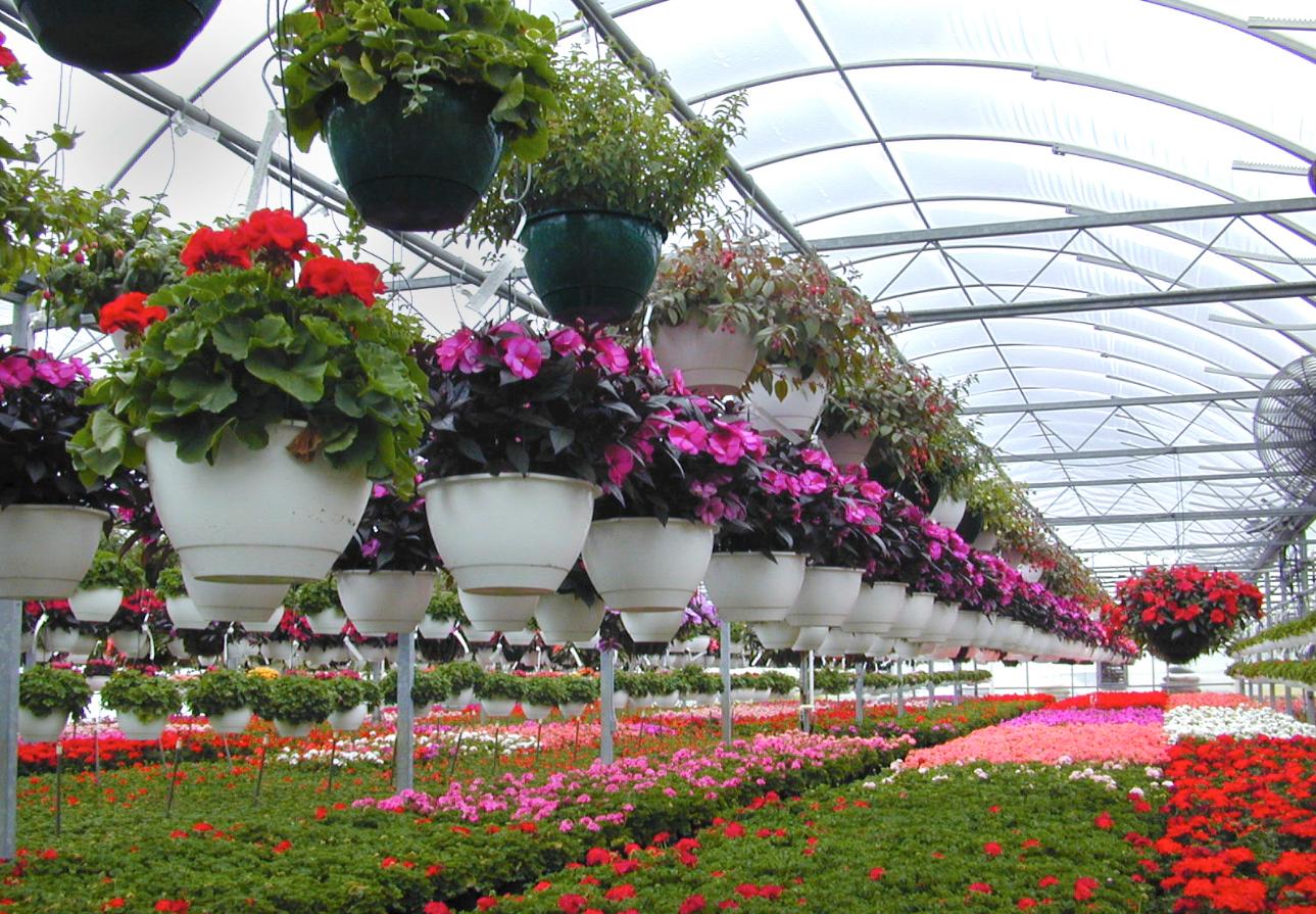 Бизнес-идея открытия цветочной теплицы