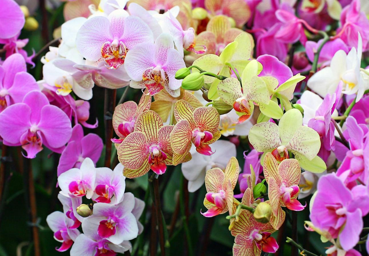 бизнес-идея выращивания орхидей в тепличном питомнике