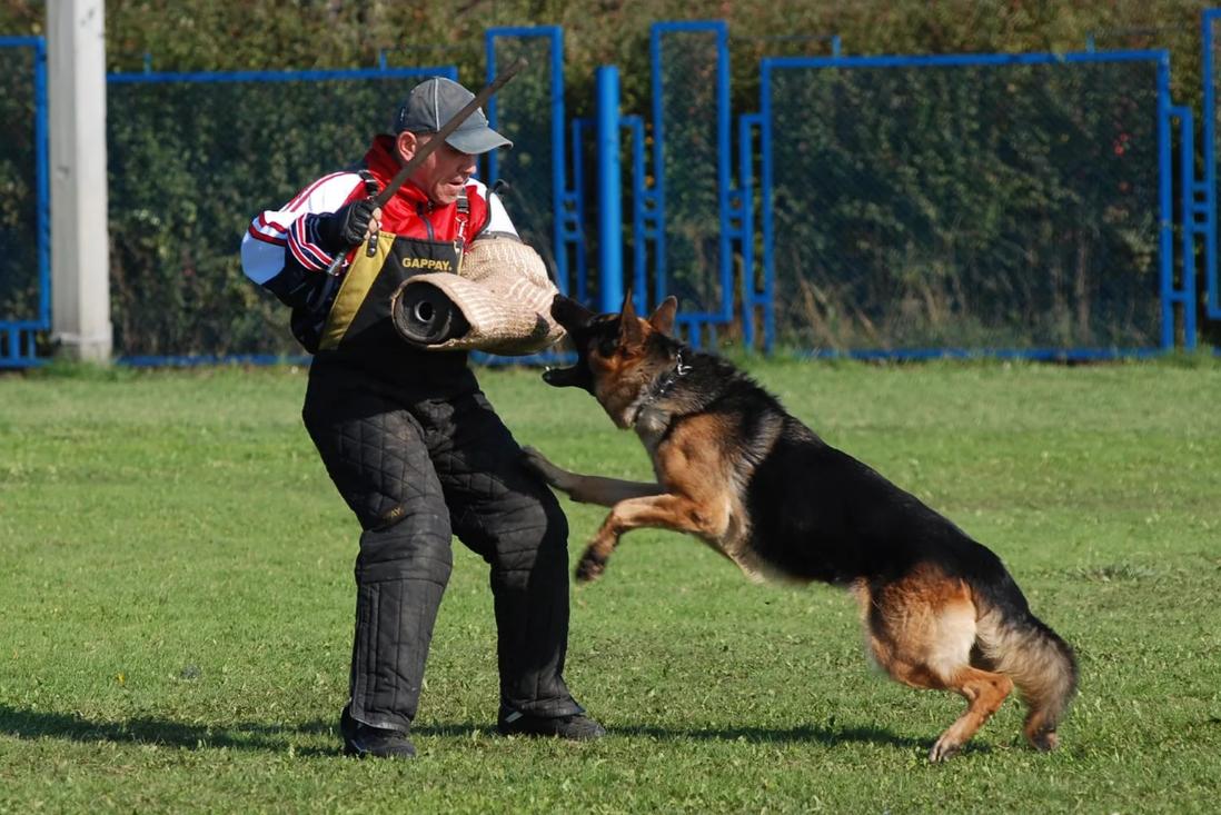 Бизнес-идея открытия курсов дрессировки собак