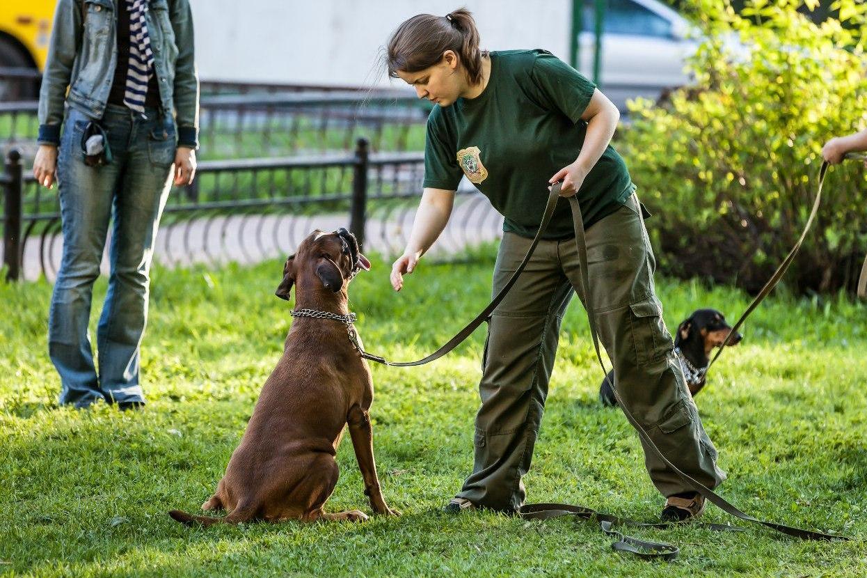 Бизнес на открытии курсов дрессировки собак