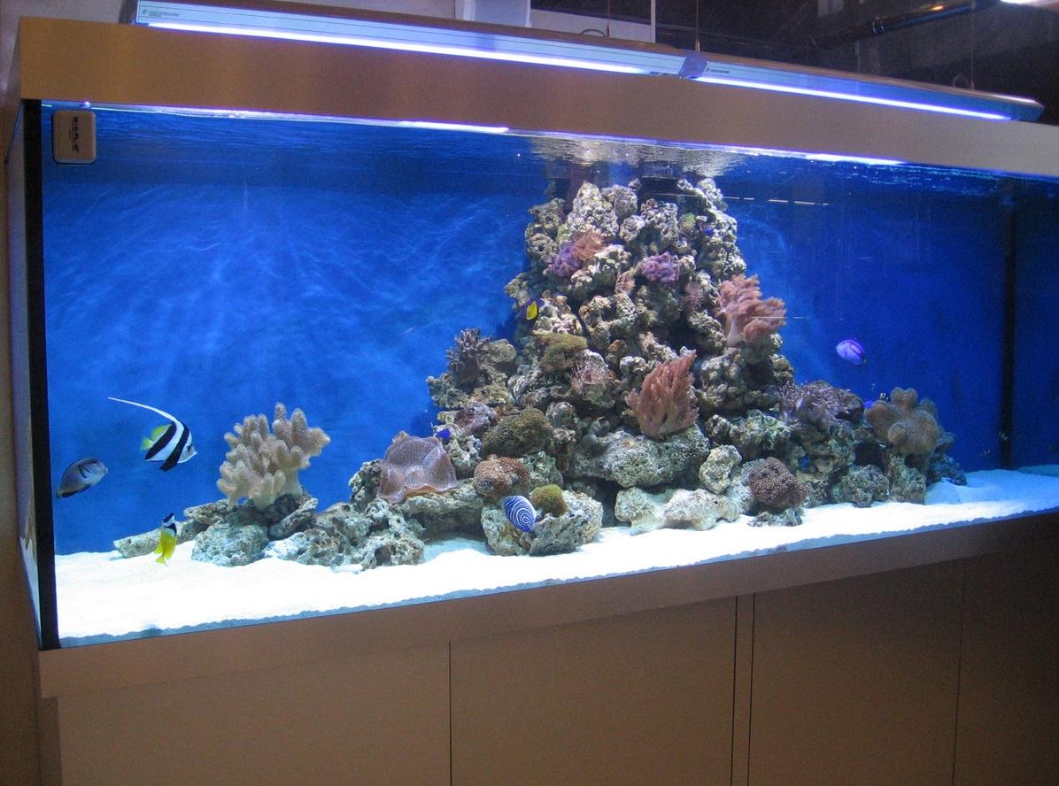 Бизнес на производстве и продаже аквариумов