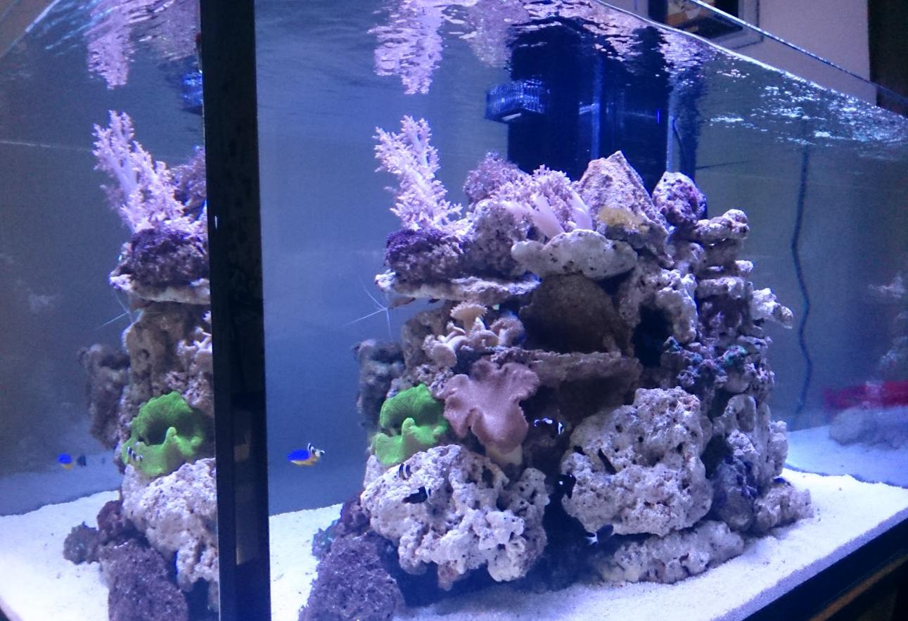 Как организовать бизнес на производстве и продаже аквариумов