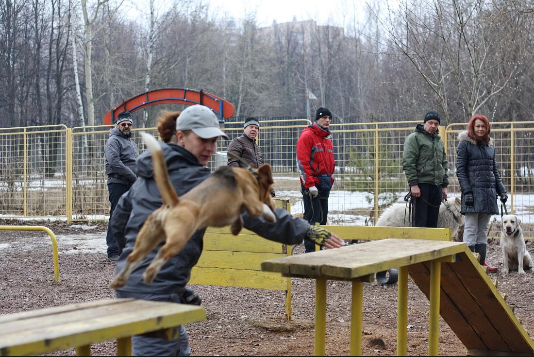Как организовать бизнес на открытии курсов дрессировки собак