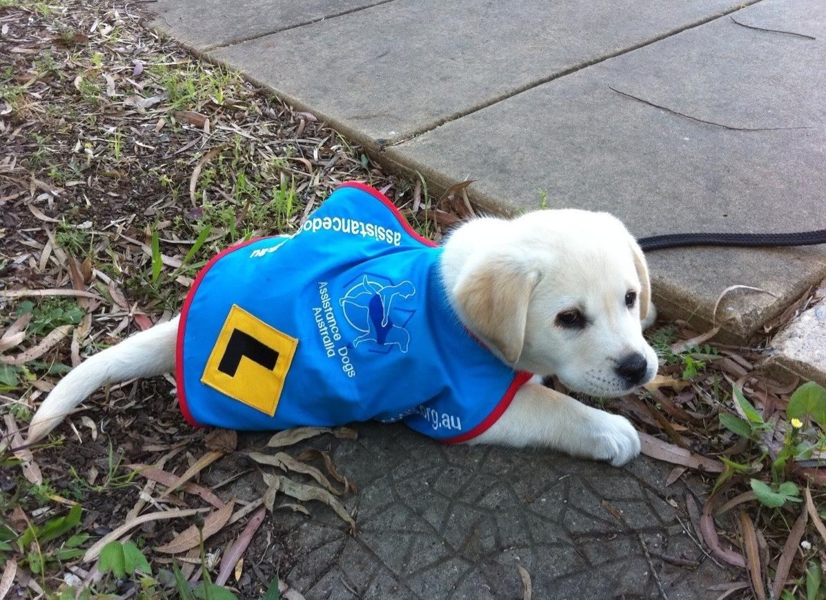Перспективы заработка на щенках