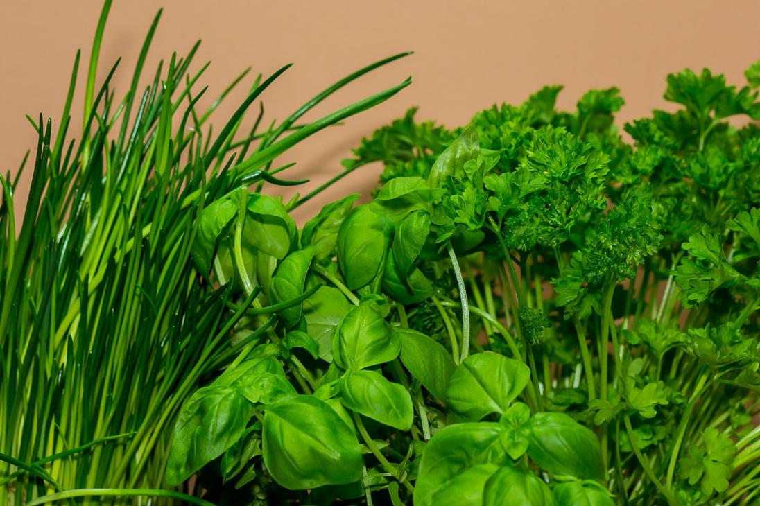 Бизнес-идея выращивания зелени на продажу