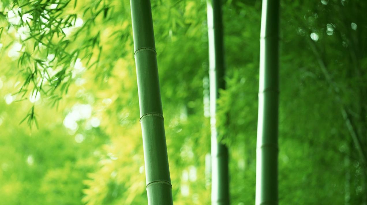 Как организовать бизнес по изготовлению удилищ из бамбука