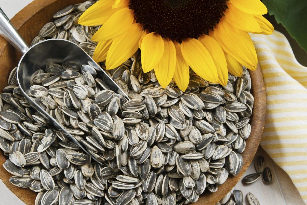 Бизнес-идея производства жареных семечек