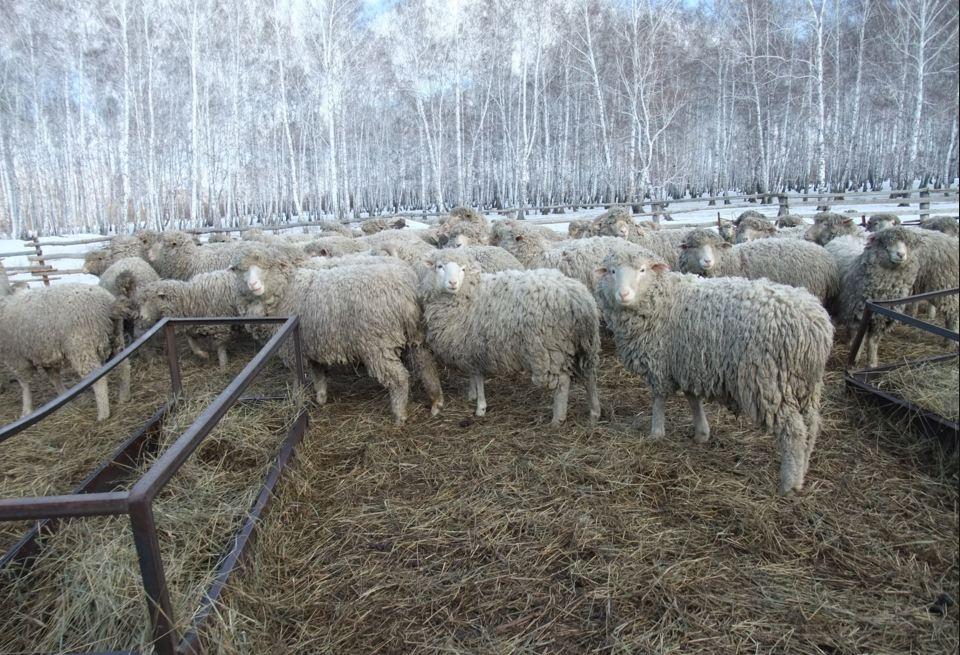 Бизнес план баранья ферма бизнес идея по переезду