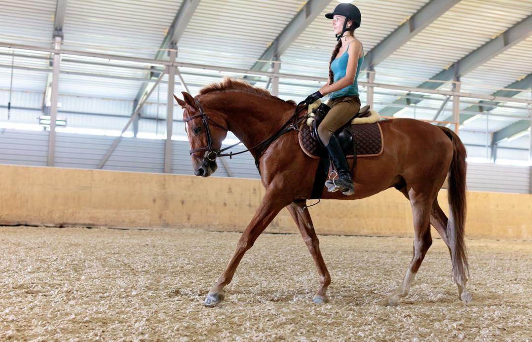 Бизнес-идея конно-спортивный клуб