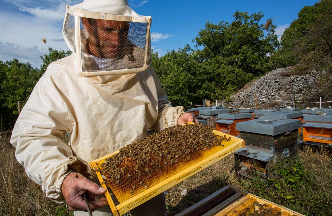 Бизнес-идея пчеловодство