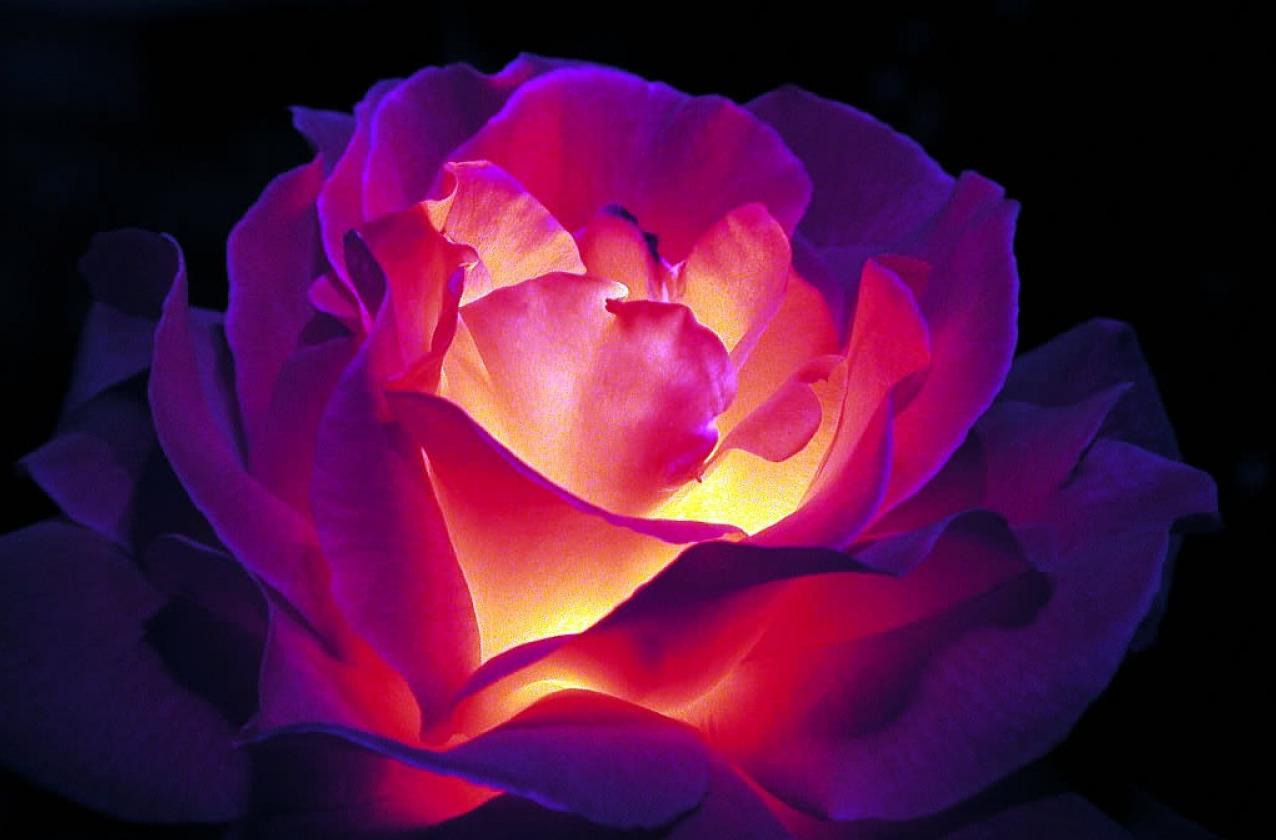 Бизнес-идея продажи цветов, светящихся в темноте