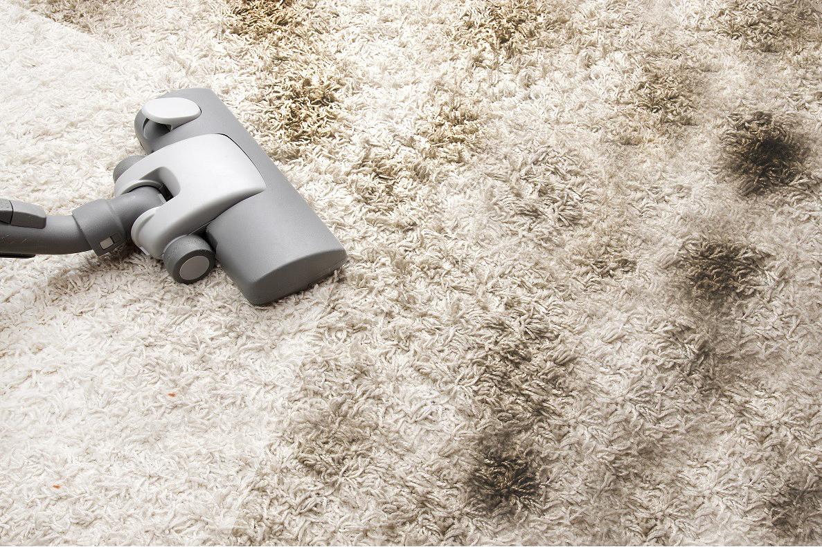 собственный бизнес по чистке ковров