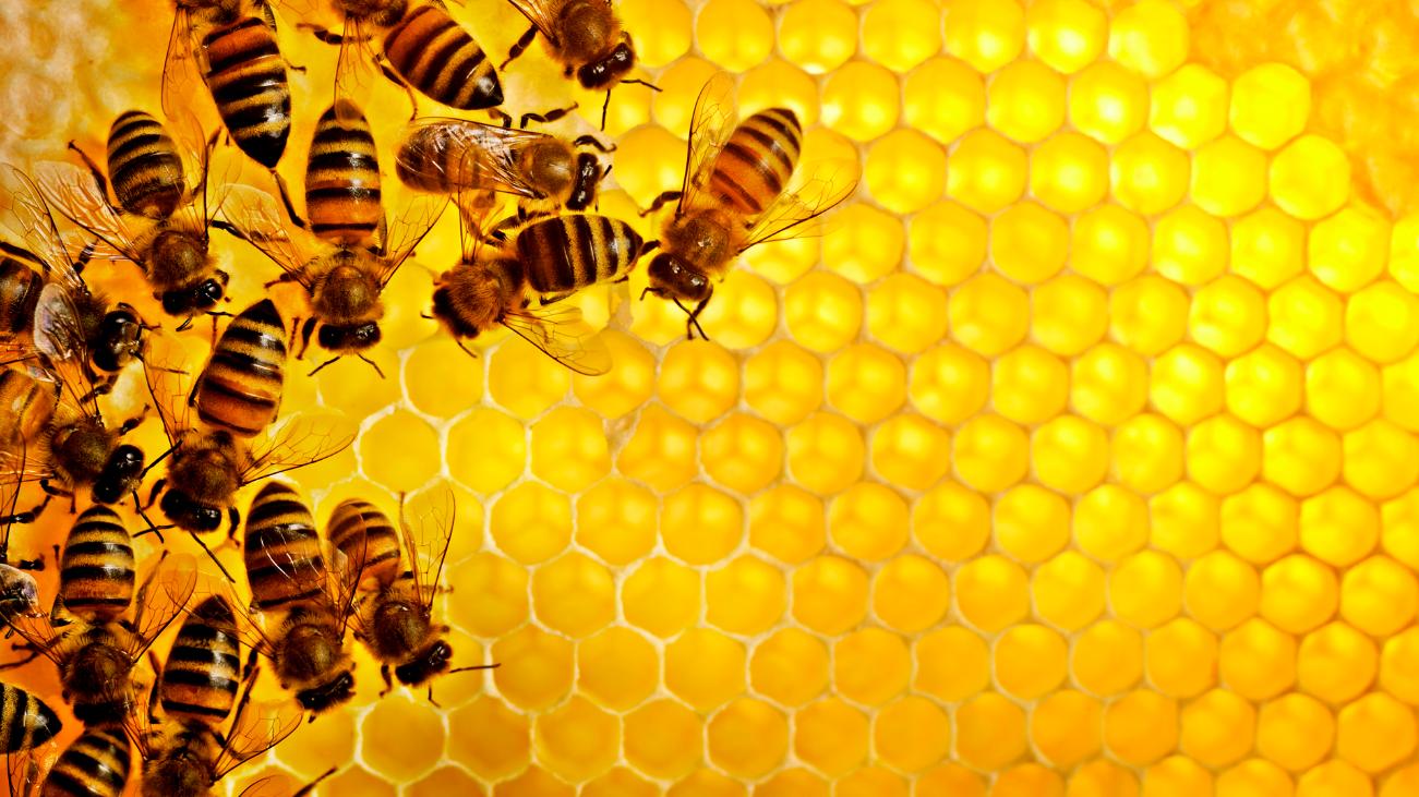 Как организовать бизнес на открытии точки по продаже мёда