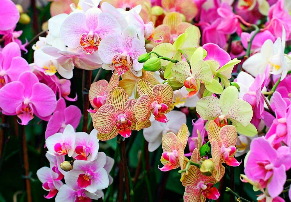 Бизнес-идея открытия питомника орхидей в теплице