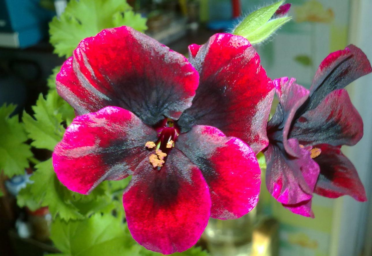 бизнес по выращиванию орхидей в питомнике-теплице