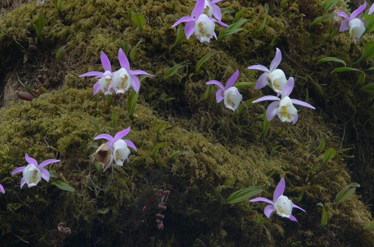 как организовать бизнес по выращиванию орхидей в питомнике