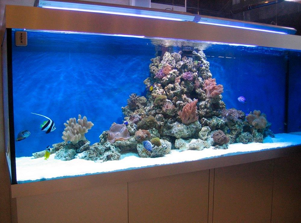 Бизнес-идея производства и продажи аквариумов