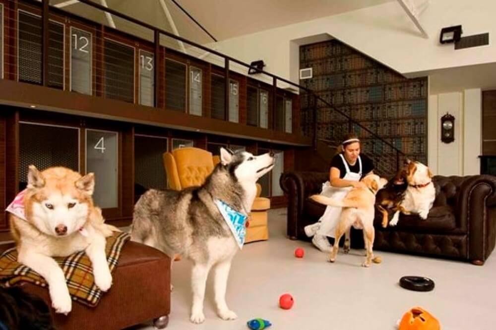 Картинки гостиницы для животных