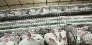 Кролики сидят в клетке