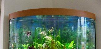 Какие бывают аквариумы