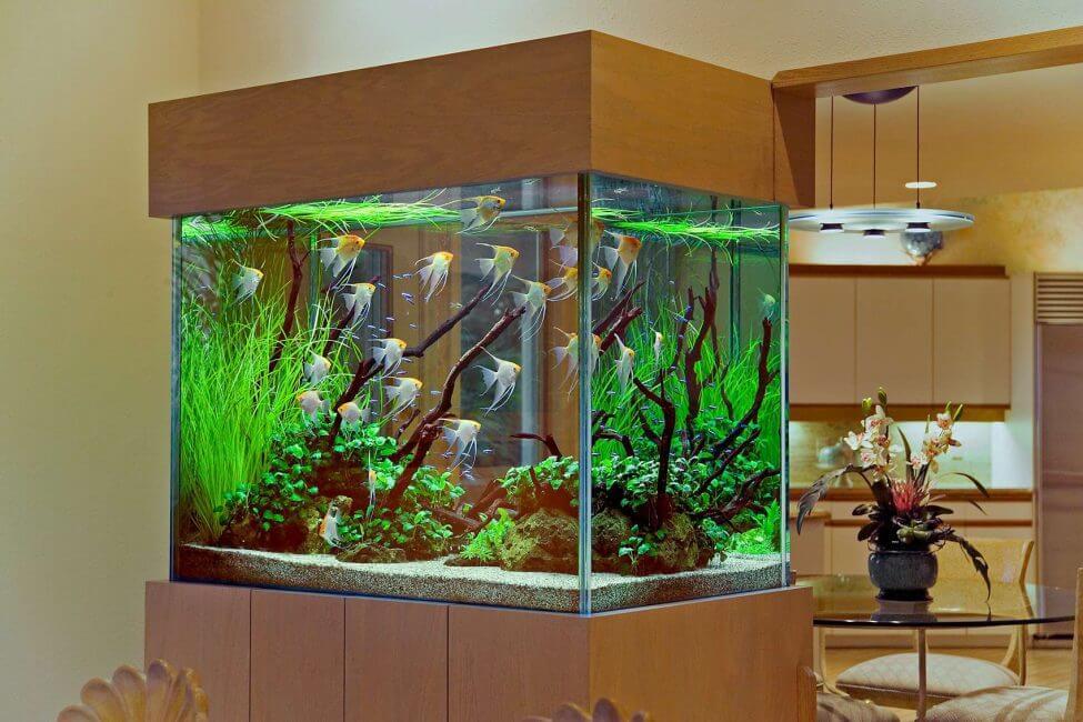 6 шагов от увлечения рыбками до аквариумного бизнеса